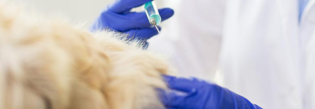arca-veterinaria.medicina-preventiva